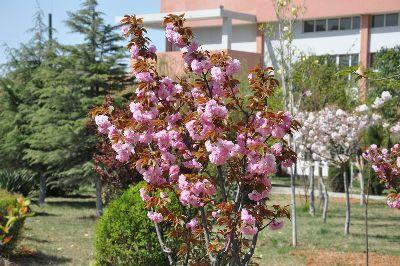 双语校园鲜花盛开